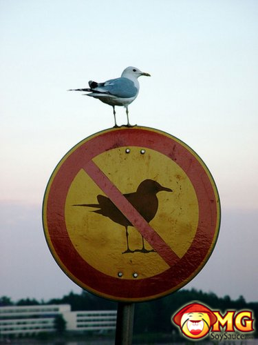 cute-bird-sign-no-birds