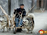 The Husky-Mobile Invention